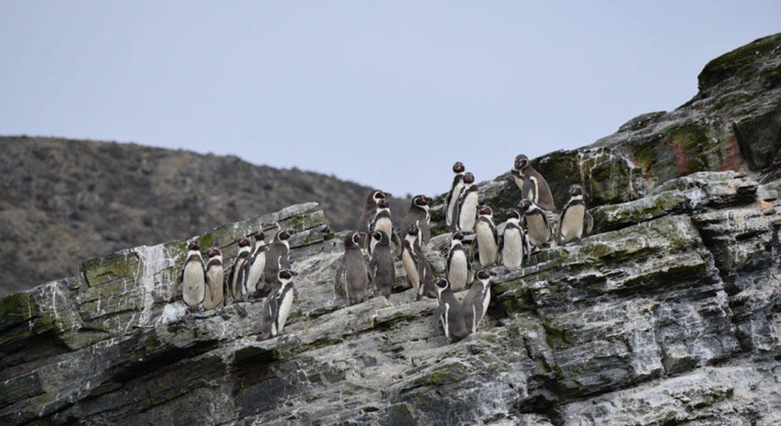 Tour Isla Chañaral de Aceituno – Reserva Pingüino de Humboldt